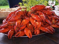 crayfishL