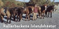 Rallarbackens Islandshästar