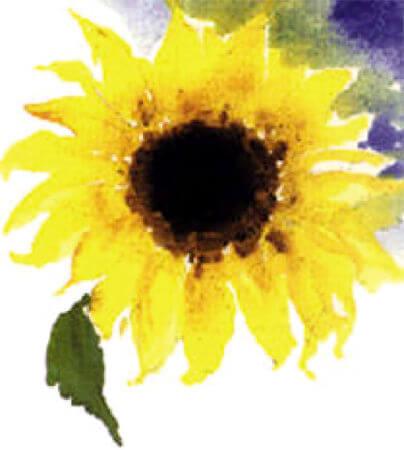 Freijas solrosillustration av Inger Gustavsson
